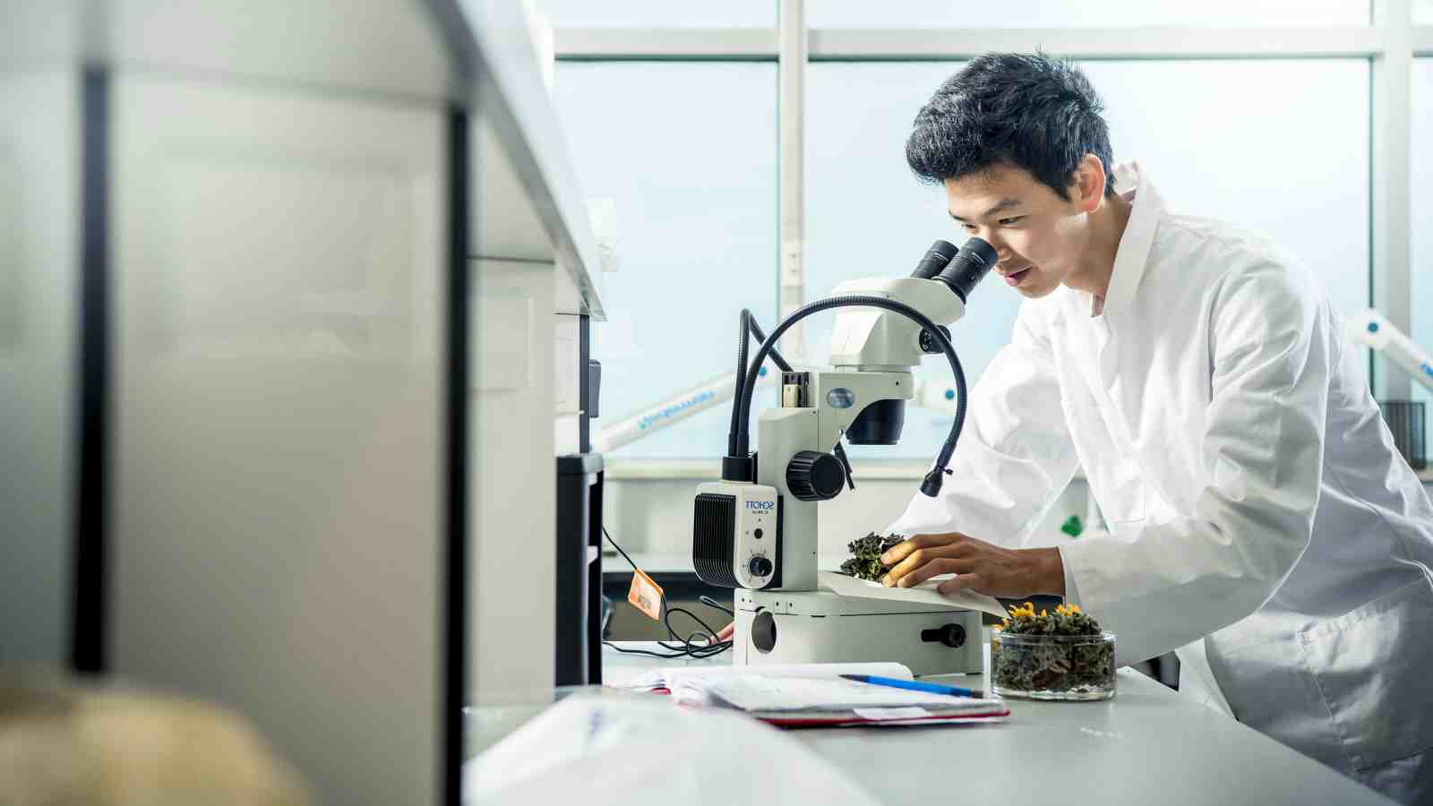 A student in a lab, looks through a microscope.