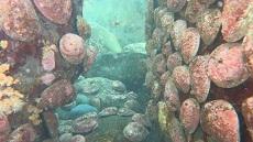 Paua at Kapiti Marine Reserve