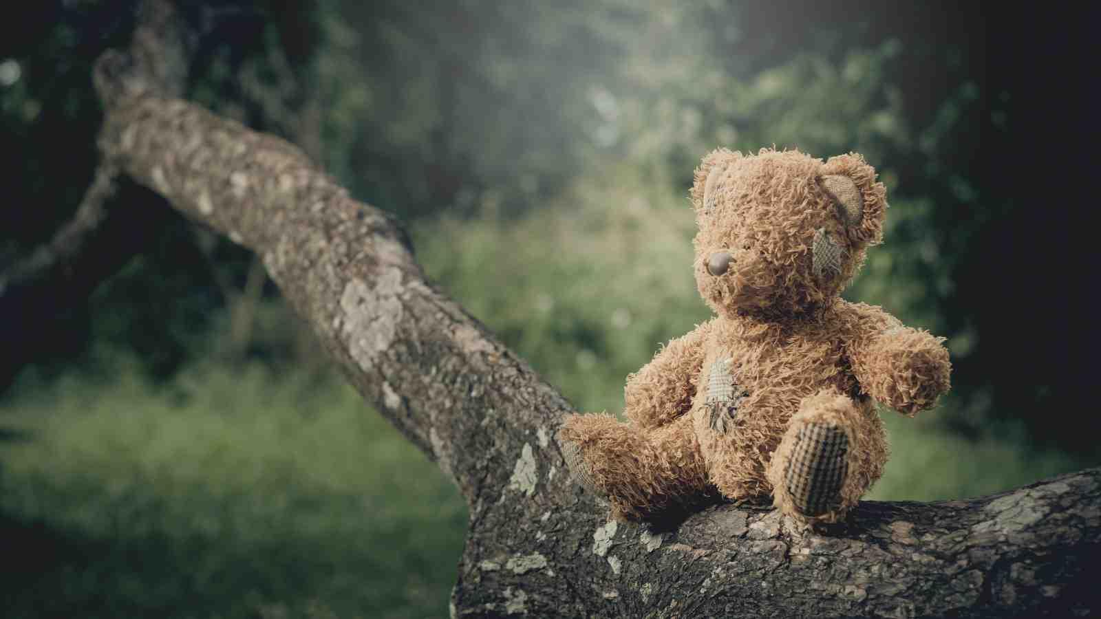Teddy bear sitting on a tree branch