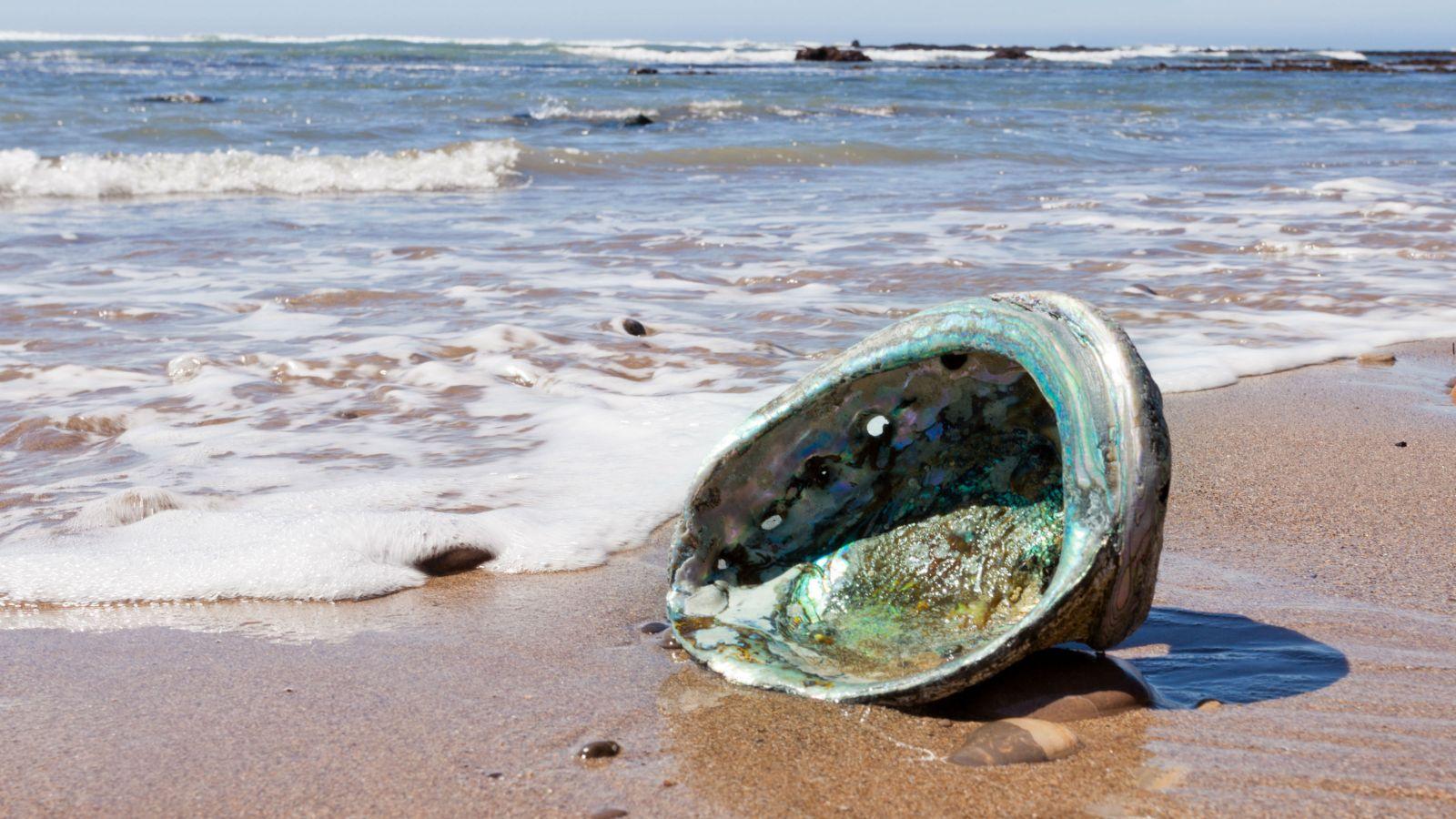 Empty shell on beach