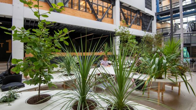 te-aro-campus-atrium-filled-with-greenery-visiting-architect-installation