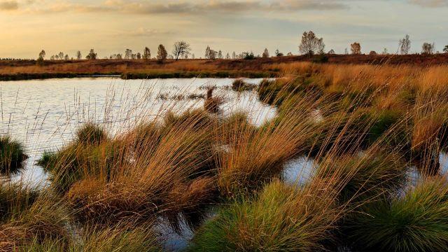 A wetland