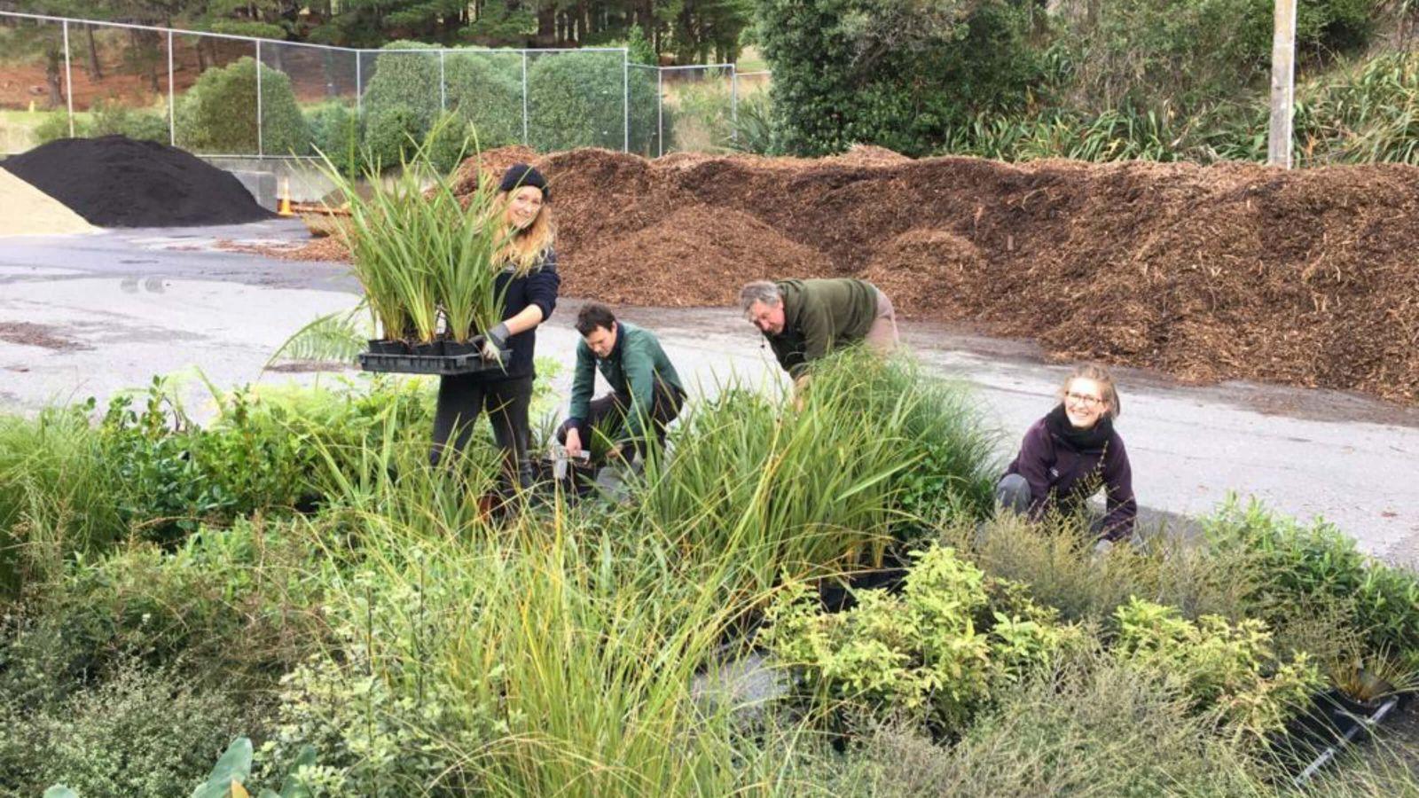 Adopt a native plant – Wellington City Council staff tending to native plants.
