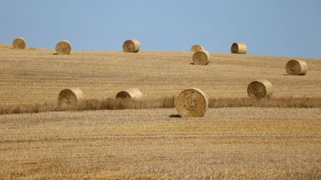 A field of hay bales in dry weather