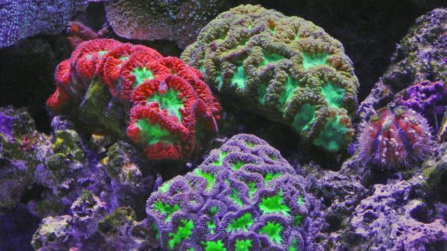 Brightly and differently coloured coral reef