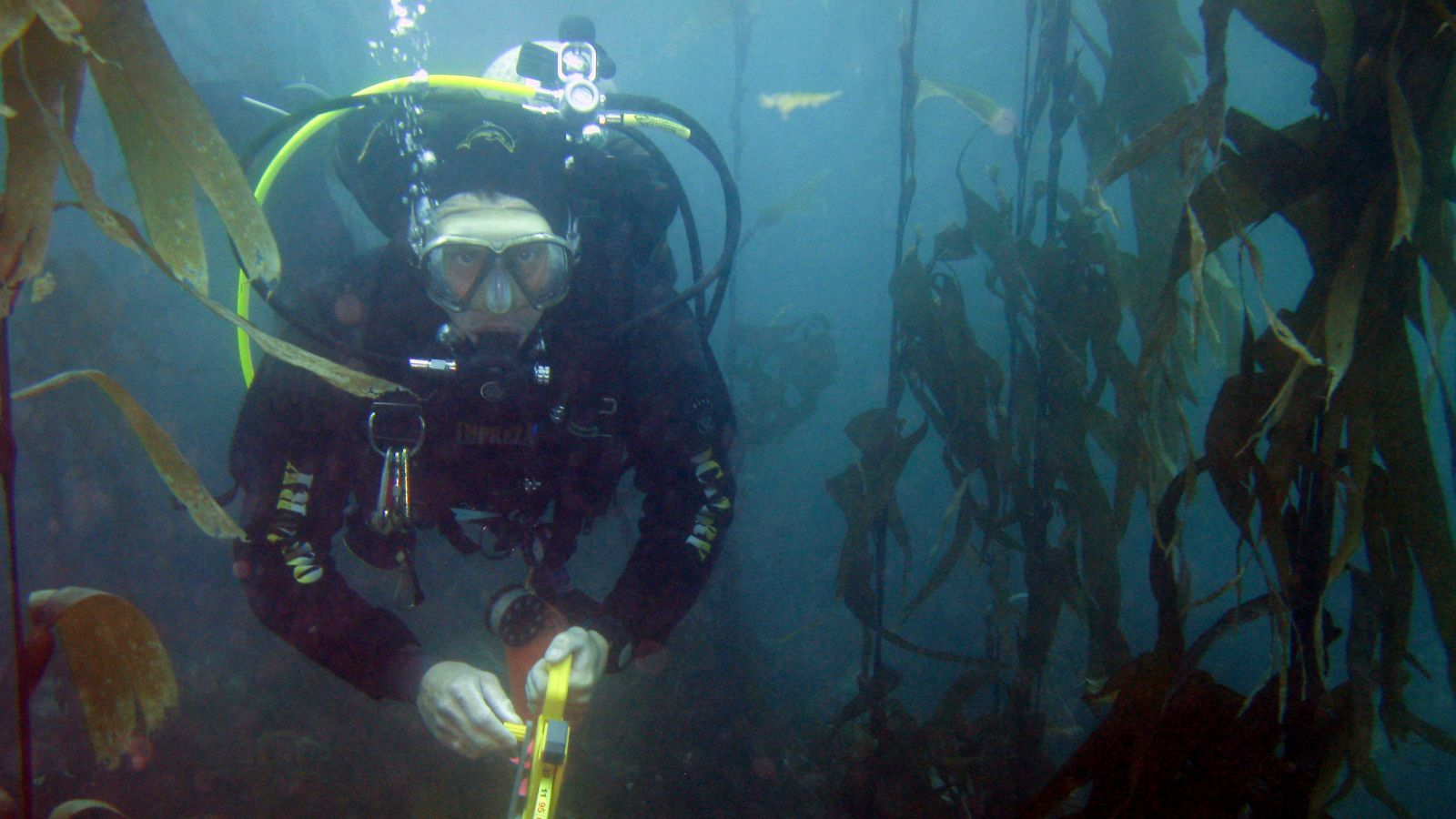 An image of a vucel diver underwater.