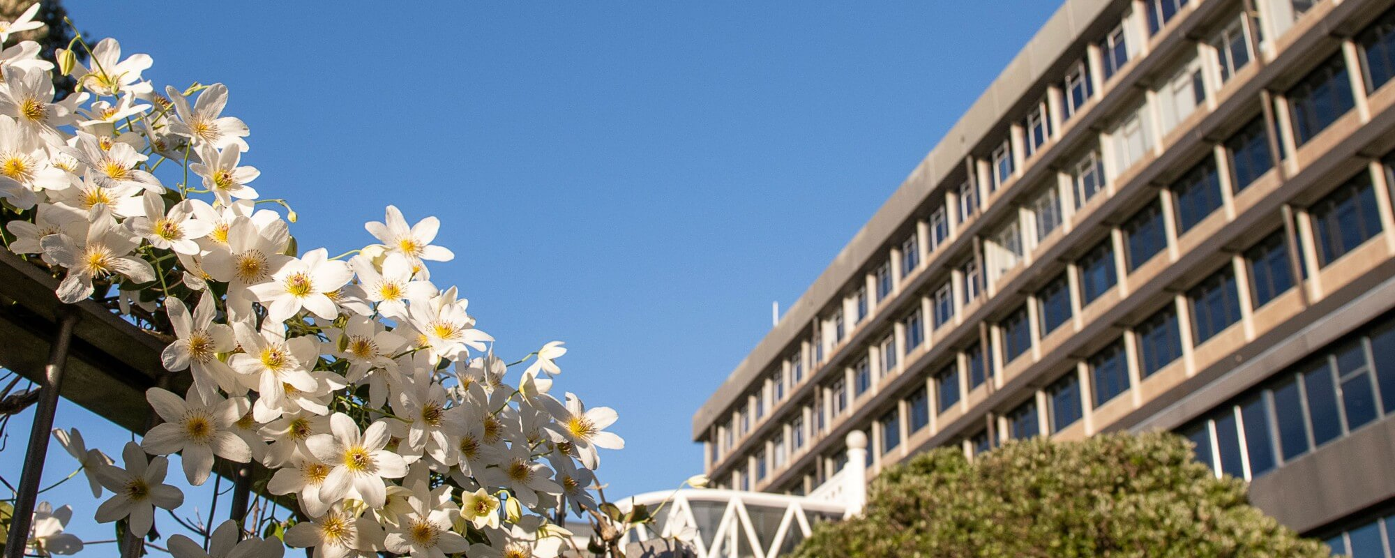 Side of Rankine Brown Library building with blue sky and white flowers in foreground
