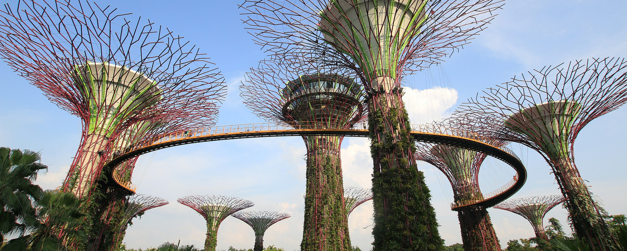 Tall artistic buildings that resemble trees that also have a skywalk connecting some of them together.