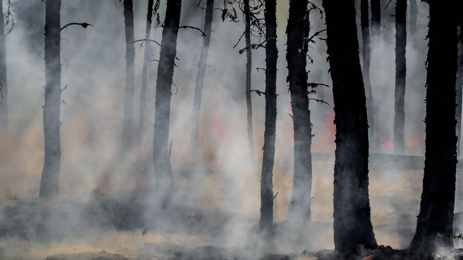 Burnt trees and ash in a forest after a fire