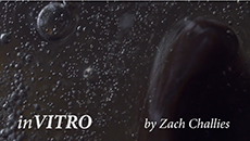 Screenshot from In-Vitro by Zach Challies