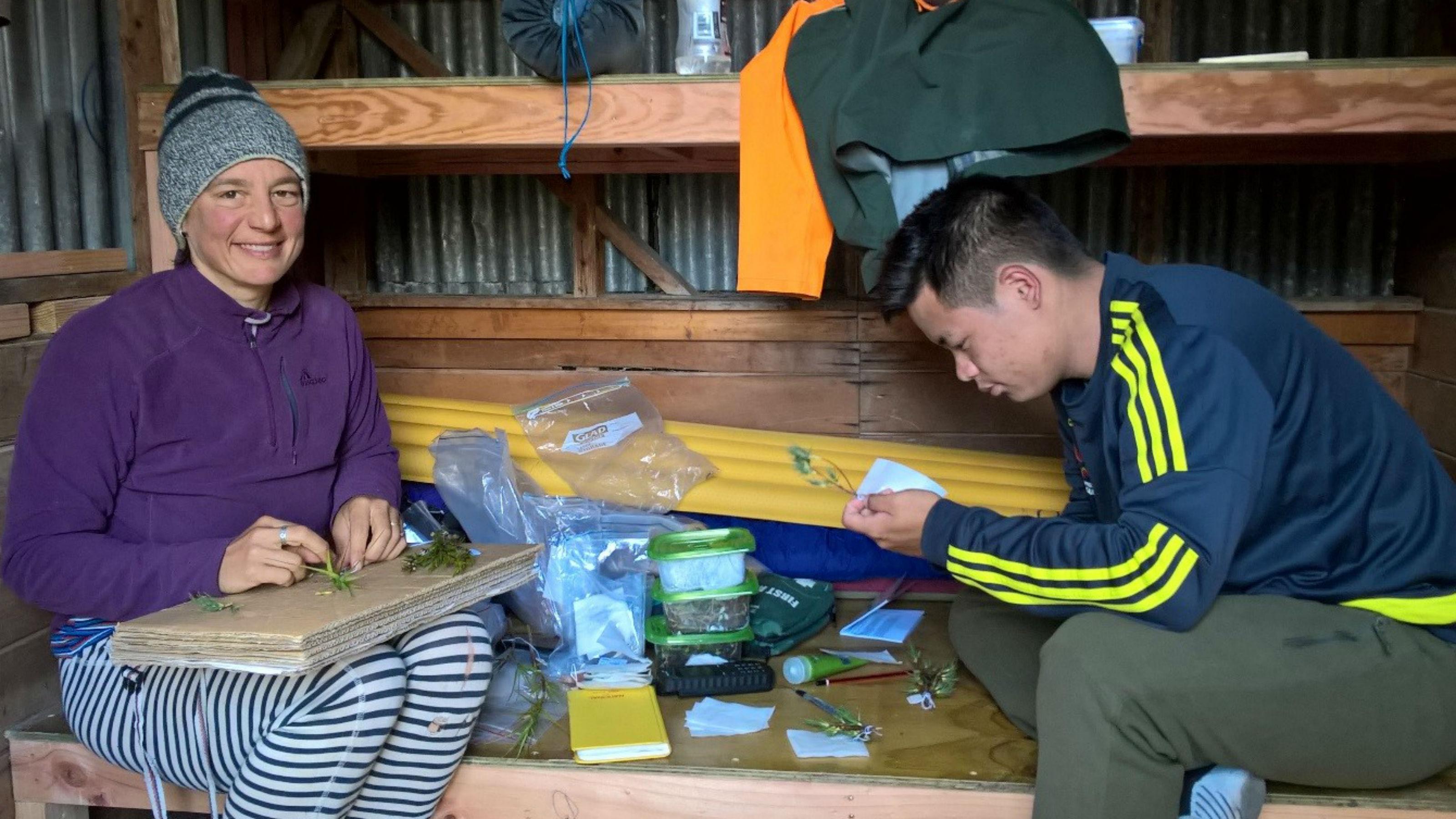 Te Papa Botanist Heidi Meudt and Justin Liu examining specimens in the field. West Coast, South Island, New Zealand
