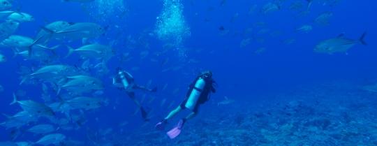 bell-scuba