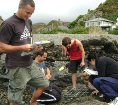 Students using quadrats in a rocky shore study
